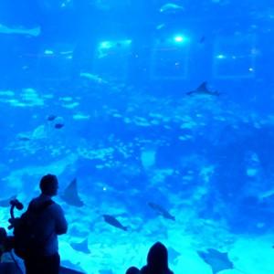 世界最大級の水族館!シーアクアリウムへ行ってみた!