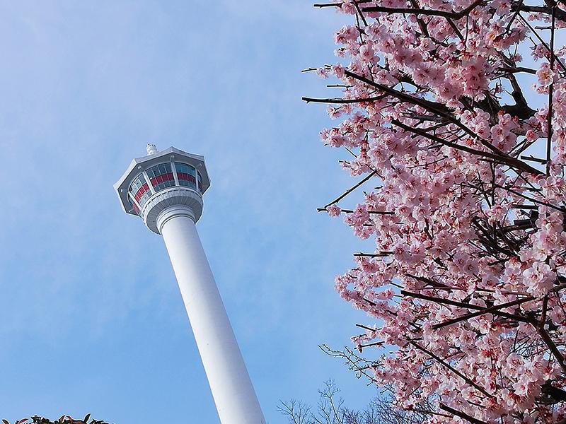 韓国・釜山の街を一望!さくら咲く釜山タワーに行ってきた! KKday【PR】